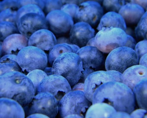 blueberries protein